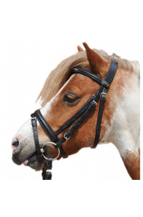 Bridle + reins -Shetty-