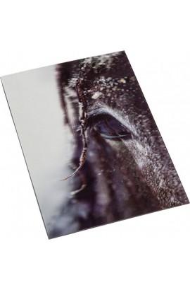 3d postcard -horse impression-