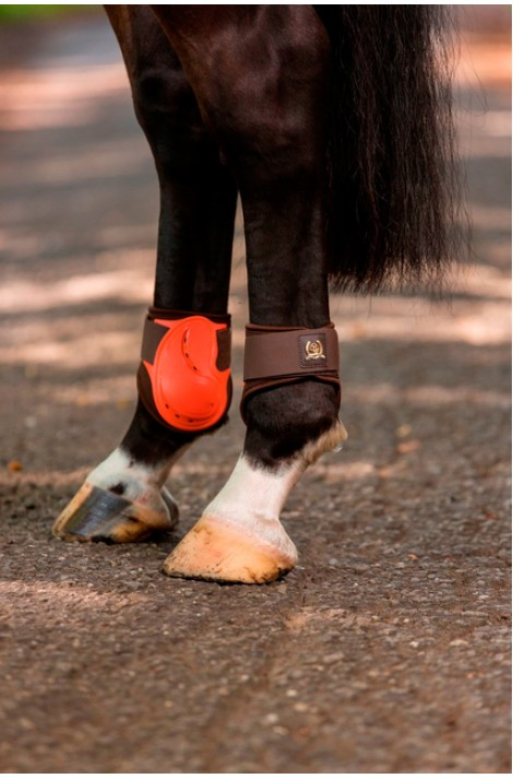hind -golden gate- fetlock boots